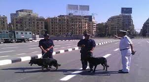 رعب بين طالبات الزقازيق بسبب تفتيش الكلاب البوليسية