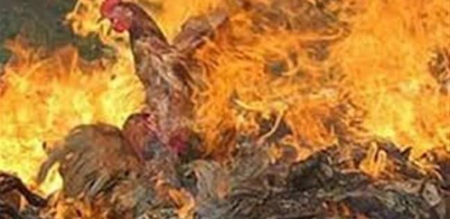 نفوق آلاف الدواجن في حريق مزرعة بسيدي سالم