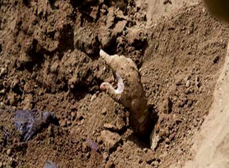 فتاة القبور تنفى دفنها حية بإحدى المقابر بالمنيا