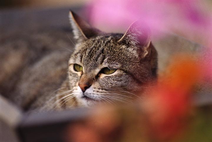 القطط بـ 9 أرواح.. القدماء المصريون يكشفون السر