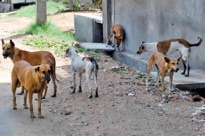 كلاب تصيب ٥ تلاميذ في مدرسة بشمال المنيا
