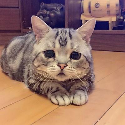 """شاهد.. """"أتعس"""" قطة علي الإنترنت"""