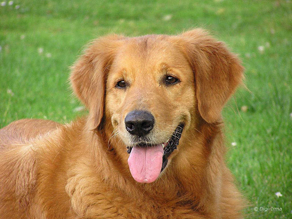 لقاء حار بين كلب وصاحبته بعد غياب