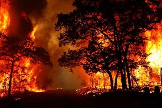 حرائق الغابات أرشيفية