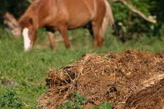 روث الخيول
