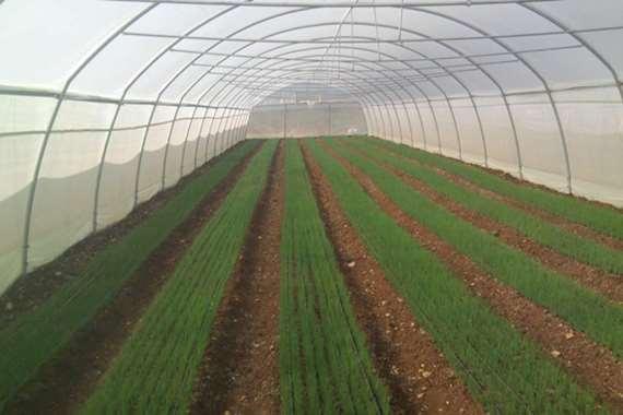 صوب زراعية