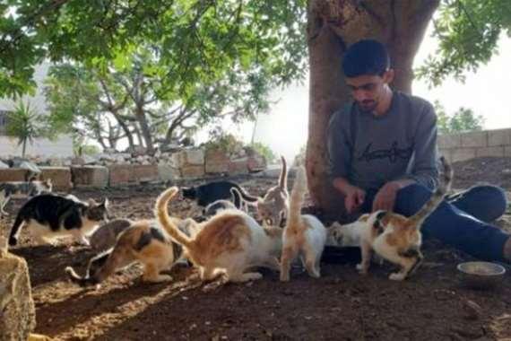القطط في أدلب مع المراسل الصحفي