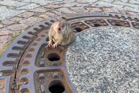 الفأر