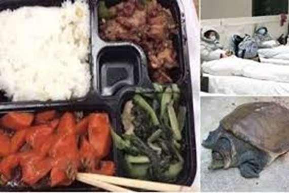 «لحوم السلاحف».. وجبة صينية جديدة لمواجهة كورونا