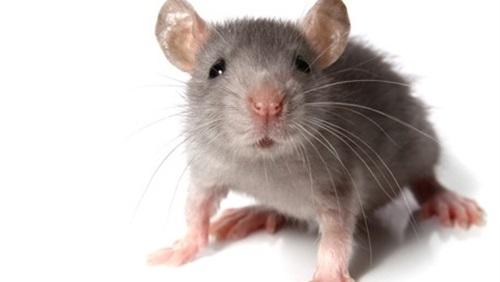«فأر» يغير مسار طائرة ويجبرها على العودة
