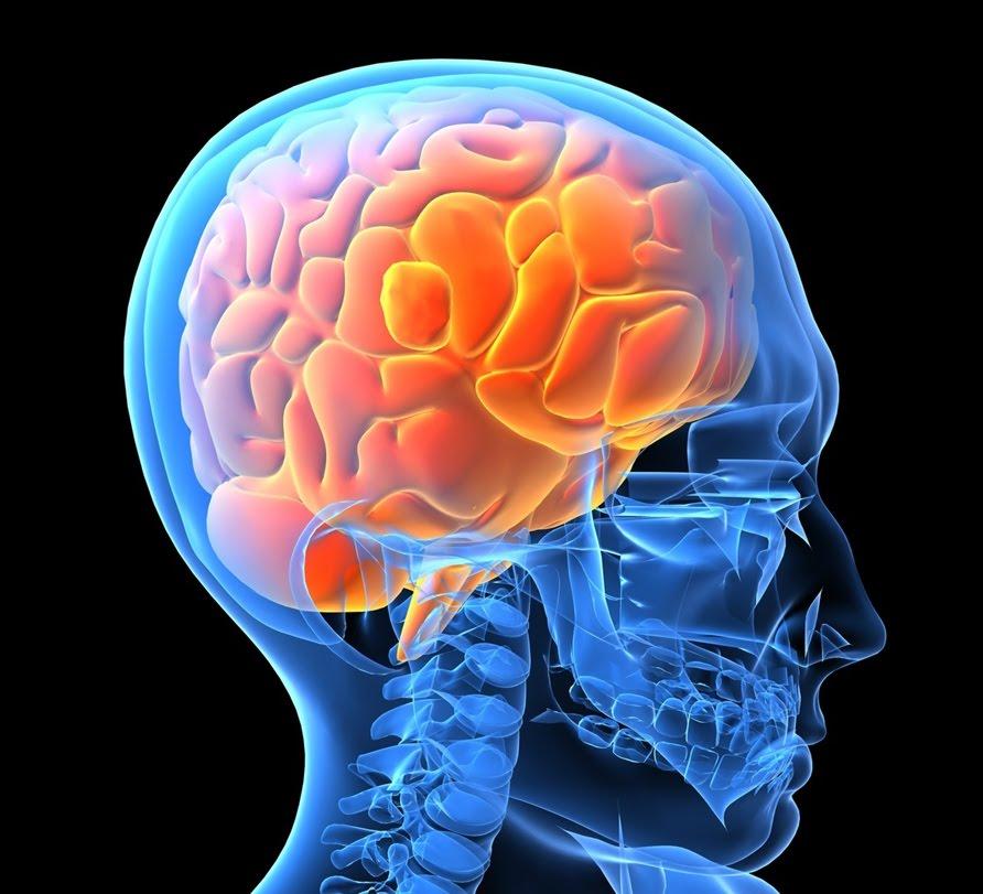 علماء: أصل الشرور جزء فى دماغ الإنسان