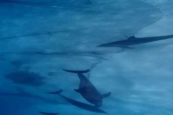 دلافين داخل شباك