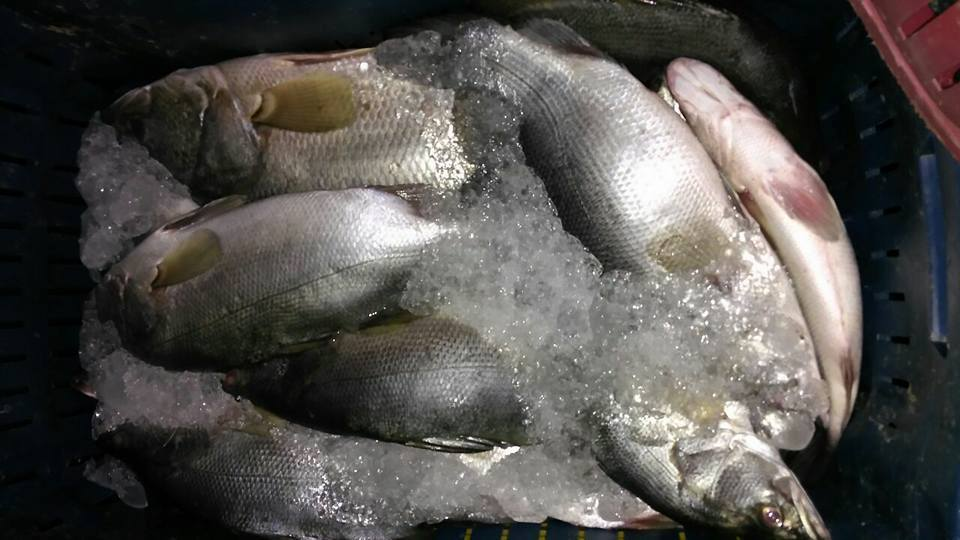 كيلو السمك بـ10 جنيهات بالغردقة