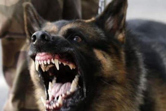 كلب يعقر 7 سيدات بطنطا