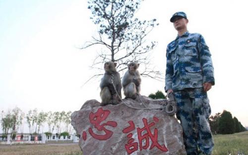 """الجيش الصيني يجند """"القردة"""" في سلاح الطيران"""