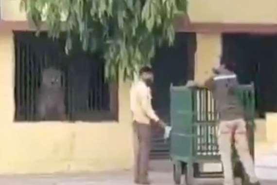 اسد يقتحم مدرسة