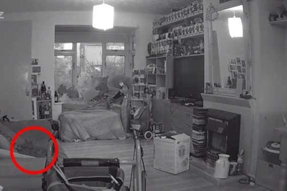 بالفيديو.. شبح قطة يظهر في ذكرى وفاتها