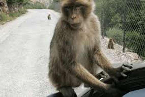 ليست نكتة.. المؤبد لقرد ارتكب هذه الجريمة