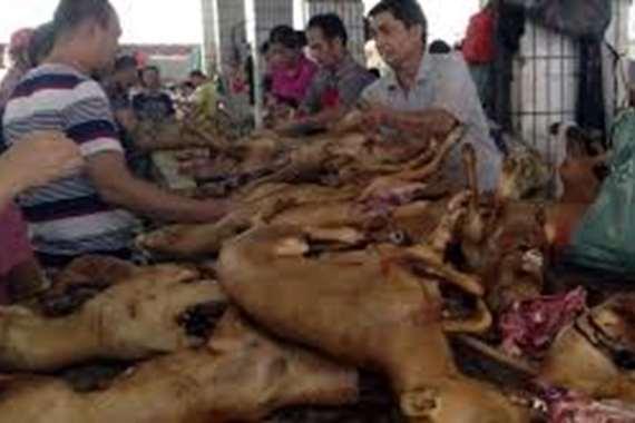 كورونا آخر الحسابات.. انطلاق مهرجان لحوم الكلاب بالصين