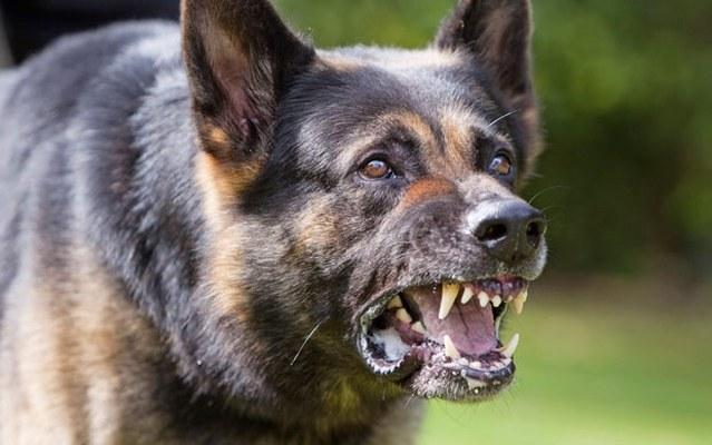 البحث عن كلب مسعور عقر 15 شخصًا بكفر الشيخ