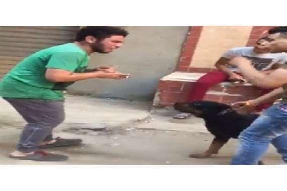 سيد سيكا يروع مواطنًا بكلبه