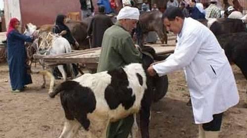 """""""بيطري الوادي الجديد"""" تنفذ حملات تحصين الماشية"""