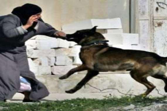 الكلاب الضالة تعقر 27 مواطنا بالفيوم