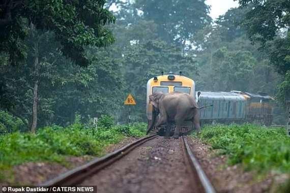 مقتل العشرات سنويًا.. القطارات تدهس الأفيال في الهند