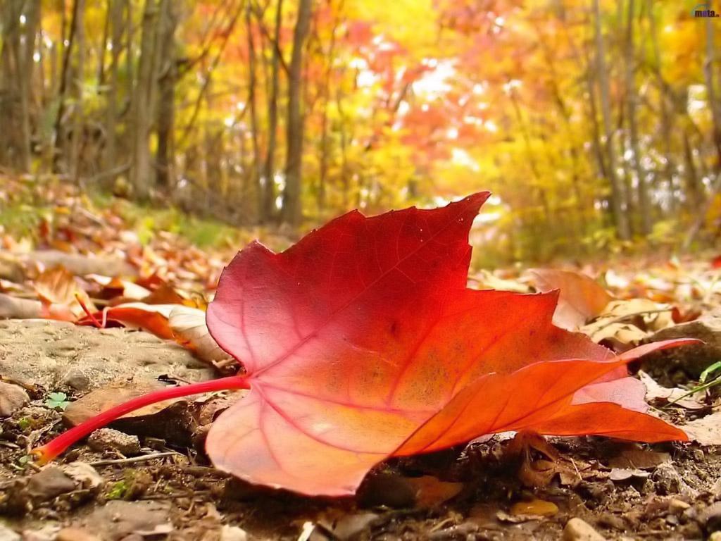 الأرصاد: بدء فصل الخريف بعد 3 أسابيع