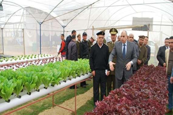 مزارع إنتاج زراعى في السجون