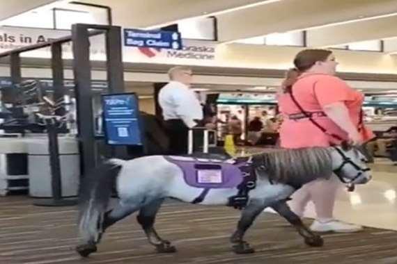 سيدة تصطحب حصان