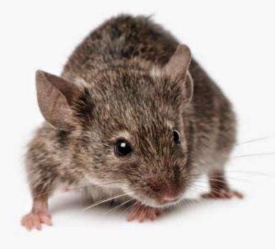 """فلاح يفوز بلقب"""" بطل صيد الفئران الوطني"""""""