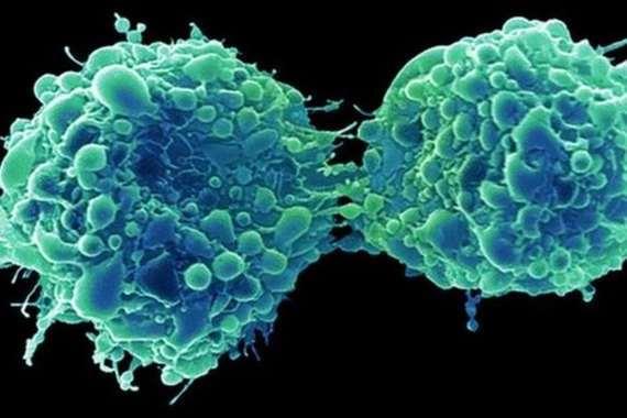 فيروس لعلاج سرطان المثانة